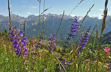 Blumenwiesen am Sonnenplateau